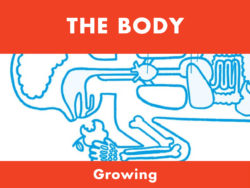 The Body - Growing