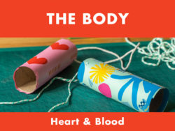 My Body - Heart & Blood