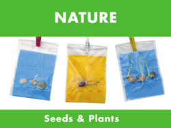 Nature - Seeds & Plants